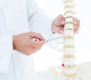 Doctor showing anatomical spine with his pen